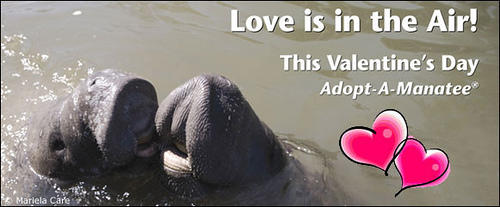 I got a Valentine from my manatee!